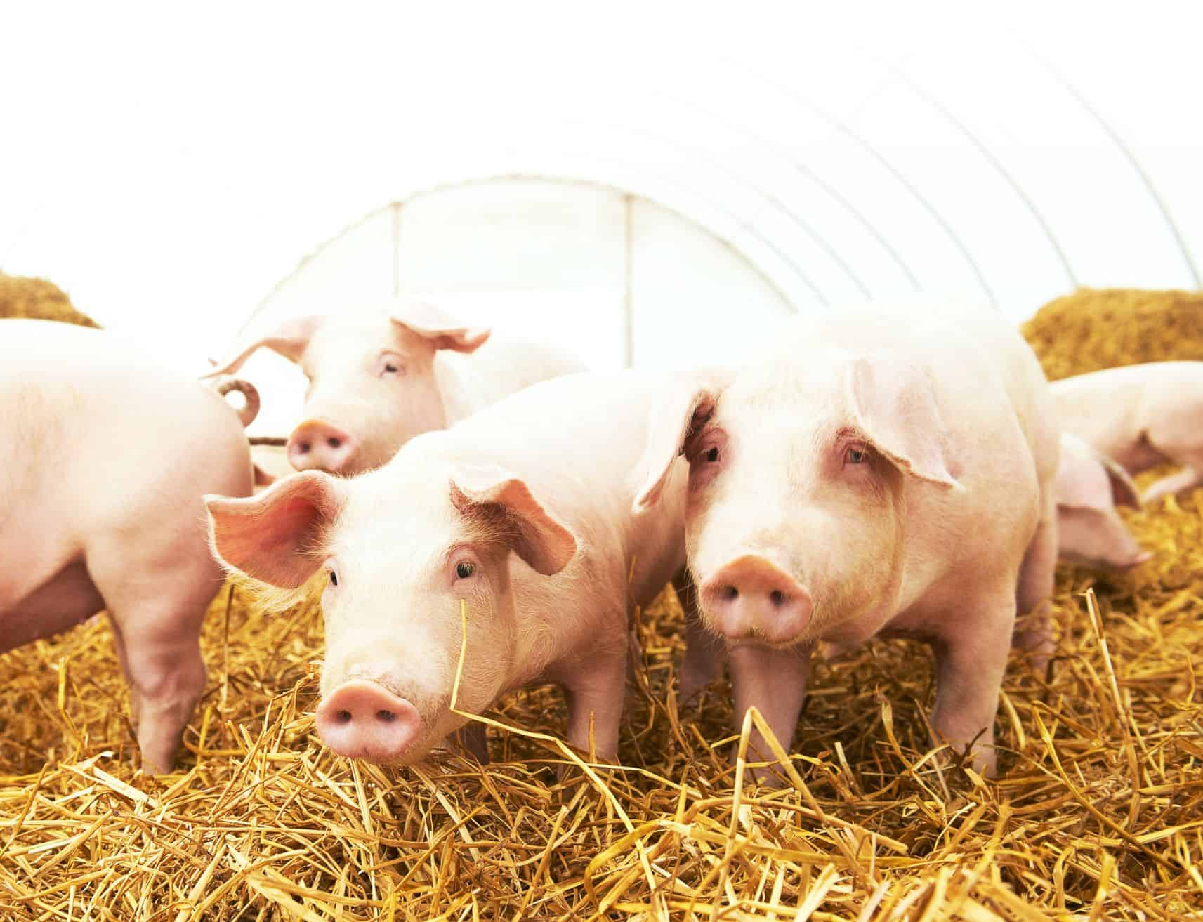 Talking Points: Animal Health