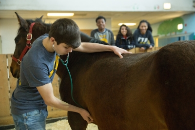 7 Reasons to Apply for an FFA Scholarship Now | National FFA