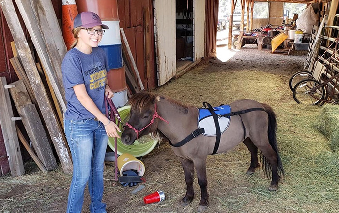 A Passion for Horses Reins This SAE