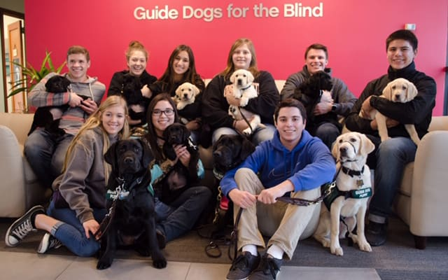 FFA Chapters Raise Guide Dogs for the Blind