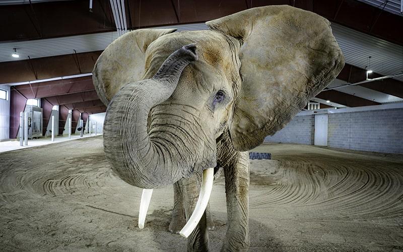 Engineering for Elephants