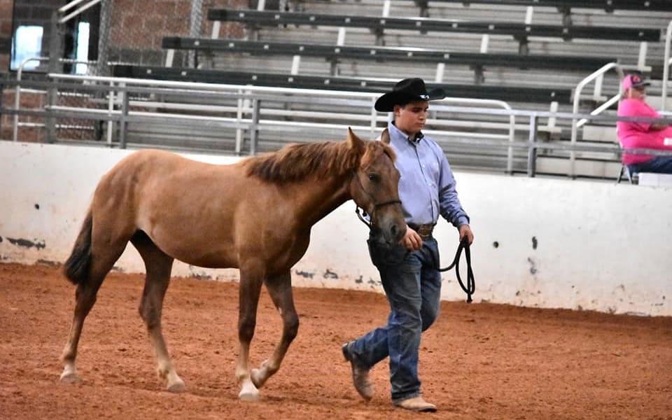 FFA Members Work to Fix a Feral Horse Problem