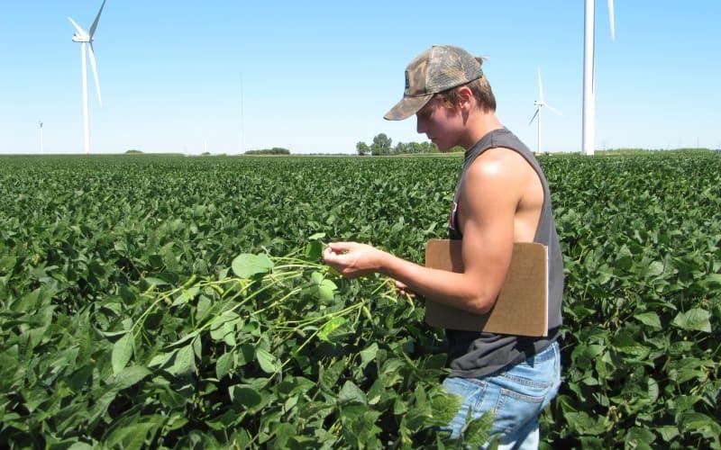 Nate Leystra crop scouting